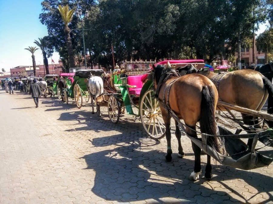 Surviving Marrakesh   MVMT Blog